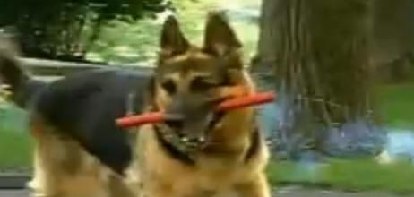 juste pour rire le chien explosif