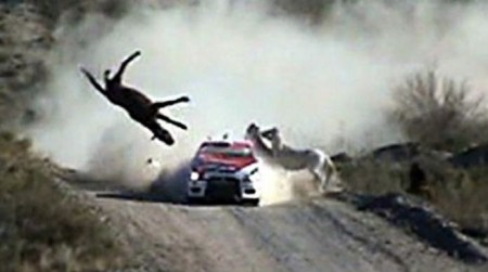 rallye argentine crash cheval