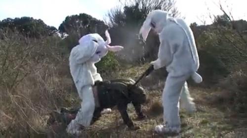 remi gaillard - lapin chasseur