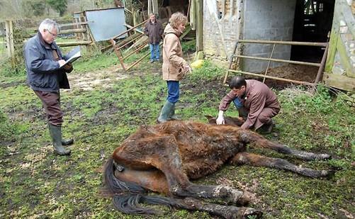 animaux maltraité