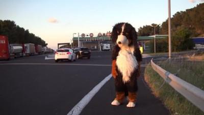 remi-gaillard-dog