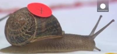georges-escargot
