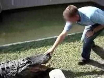 regis est un con face un alligator