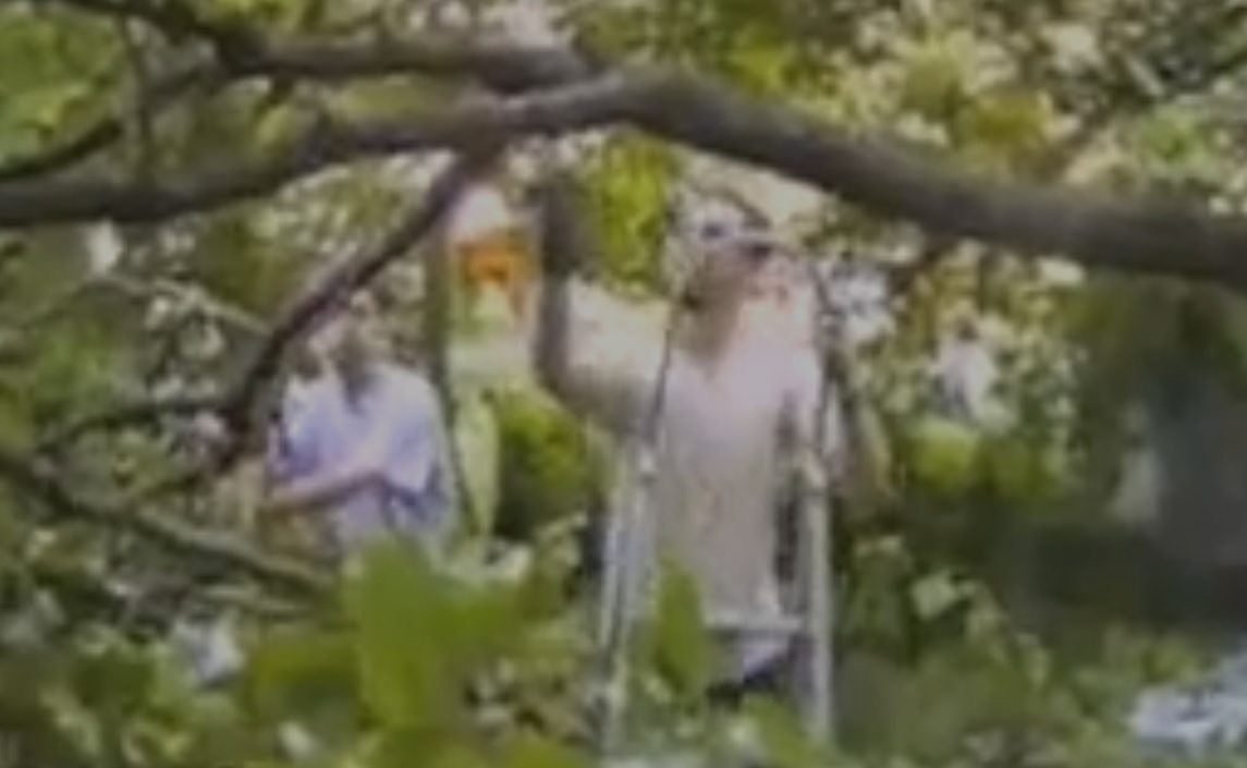 Régis coupe une branche