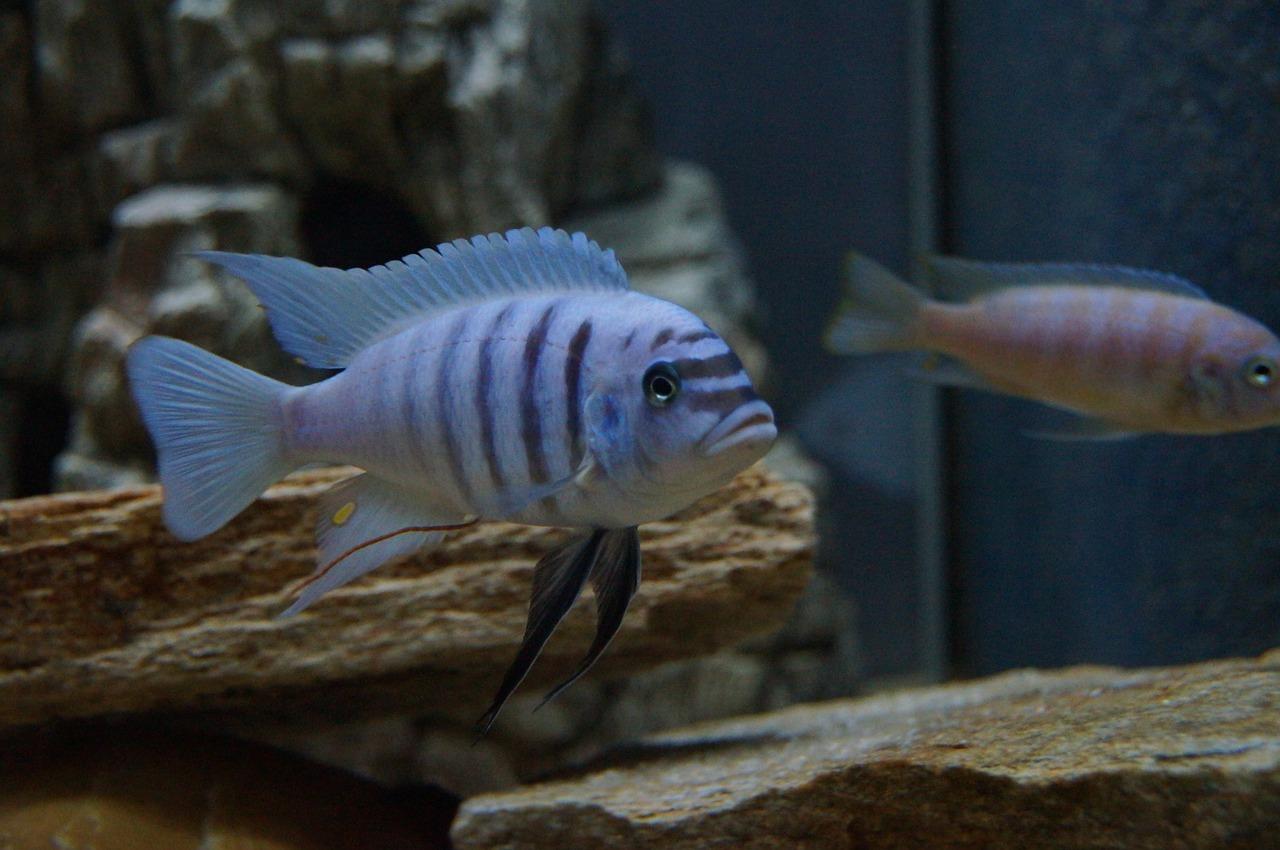 aquarium dans votre maison